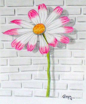 Daisy Flower by Divya Kakkar