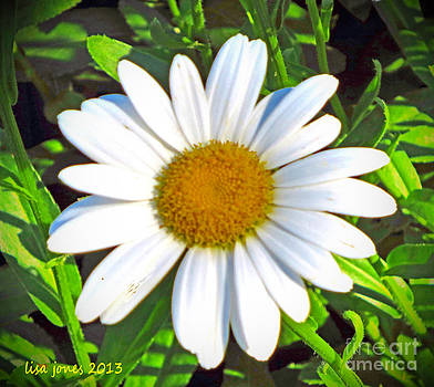 Daisy for Daisy by Lisa Jones