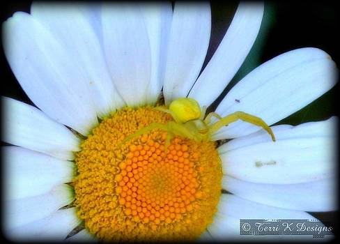 Daisy Friend 2 by Terri K Designs