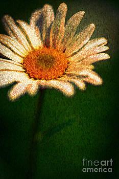 Daisy Impression by Donald Davis