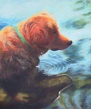 Daisy in Wading by Sherri Anderson