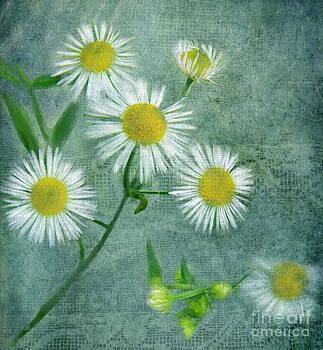 Daisy May by Andrea Kollo