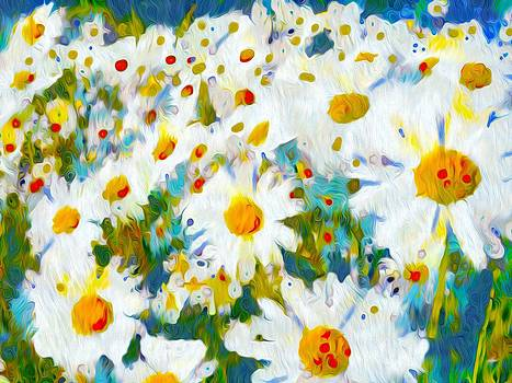 Daisy Meadow by P Donovan