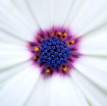 Daisy by Monic LaRochelle