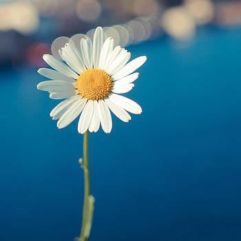 Daisy by Patrick Horgan