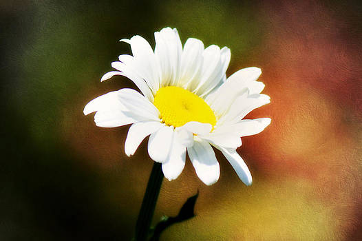 Daisy Rainbow by Melanie Lankford Photography