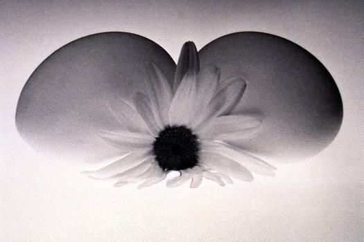 Peace by Etti PALITZ