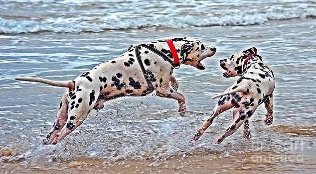 Dalmatians at play by Blair Stuart