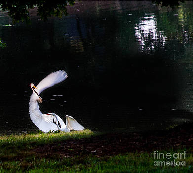 Dance of the Egret by Jinx Farmer