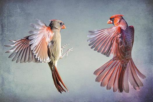 Dance of the Redbirds by Bonnie Barry