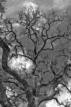 Jemmy Archer - Dancing Branches B W