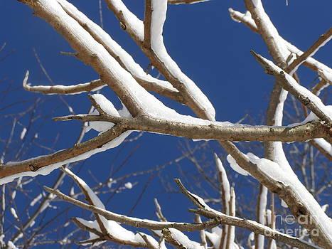Dancing Branches  by Carolyn Kami Loughlin