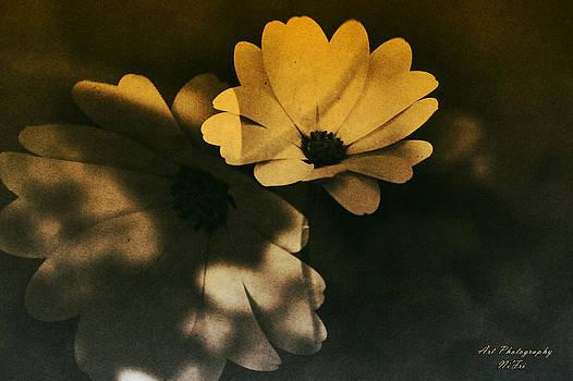 Nicole Frischlich - Dancing in the shadow