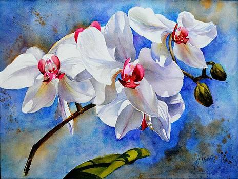 Betty M M   Wong - Dancing orchids