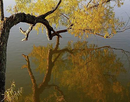 Dancing Willow by Lisa Comperry