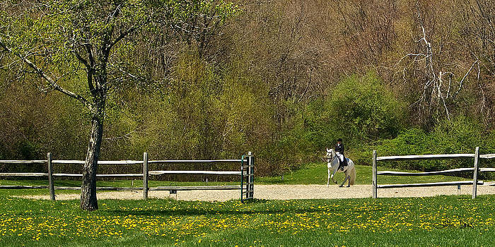 Dandelion Dressage by Joan Davis
