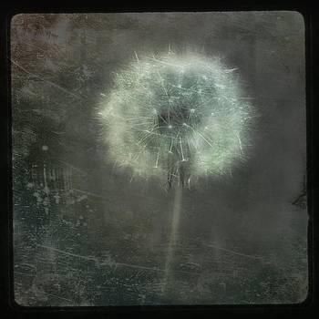 Gothicrow Images - Dark Dandelion Grunge