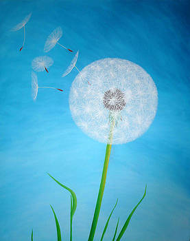 Dandelion in the summer by Sven Fischer