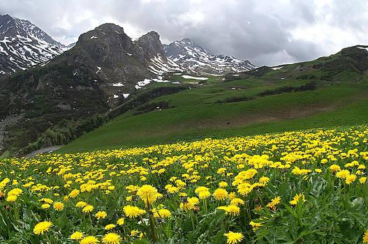 Dandelion Mountain by Erik Tanghe