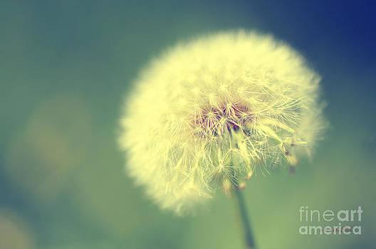 Karen Slagle - Dandelion Seed Head