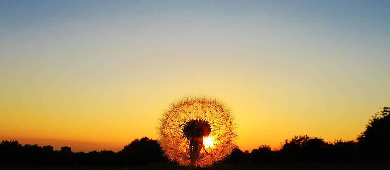 Dandelion time  by Catherine Davies