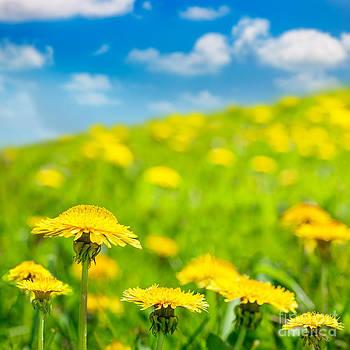 Jo Ann Snover - Dandelions in Spring