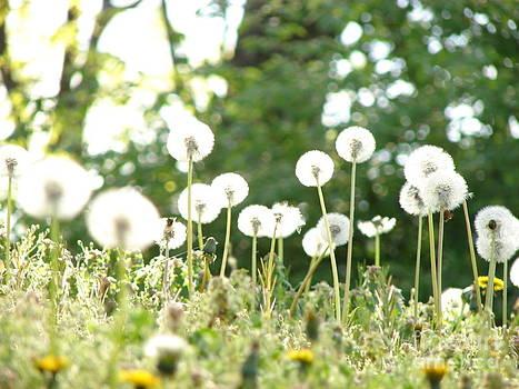 Dandelions by Leara Nicole Morris-Clark