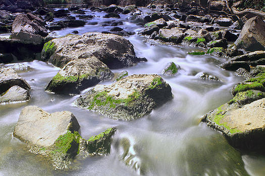 Dandenong Creek by Janaka Somaratne