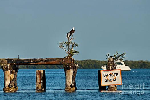 Carmen Del Valle - Danger Shoal And Ospreys