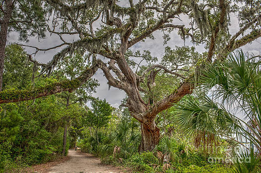 Dale Powell - Daniel Island Live Oak Tree