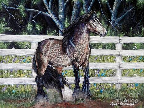 Dapple Gypsy Vanner Horse by Amanda Hukill