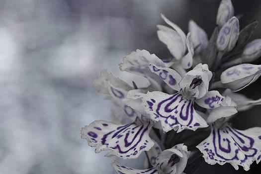Dreamland Media - Dark Angel of Flowers