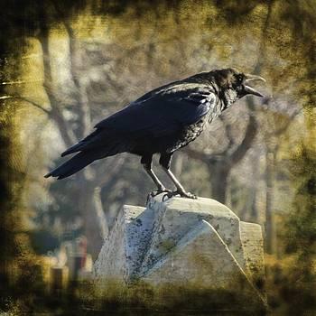 Gothicrow Images - Dark Caw