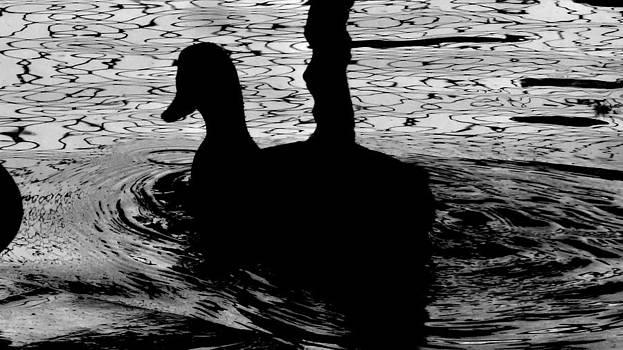 Dark Duck Play by Qamar Riaz