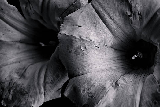 Dark Flower 03 by Grebo Gray