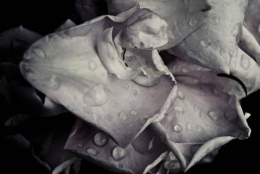 Dark Flower 10 by Grebo Gray