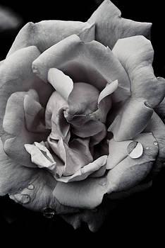 Dark Flower 11 by Grebo Gray
