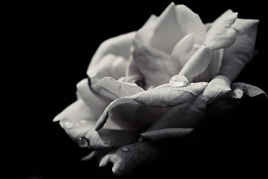 Dark Flower 12 by Grebo Gray