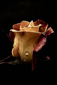 Dark Flower 14 by Grebo Gray