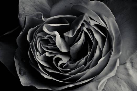Dark Flower 15 by Grebo Gray