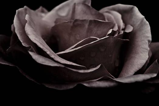 Dark Flower 16 by Grebo Gray