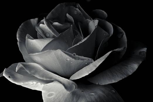 Dark Flower 17 by Grebo Gray