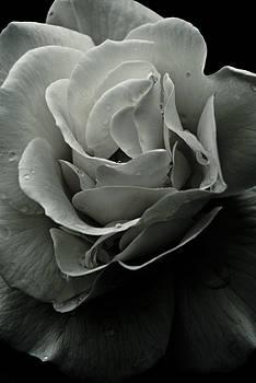 Dark Flower 18 by Grebo Gray