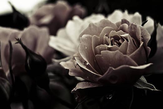 Dark Flower 20 by Grebo Gray