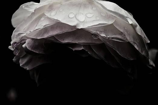 Dark Flower 21 by Grebo Gray