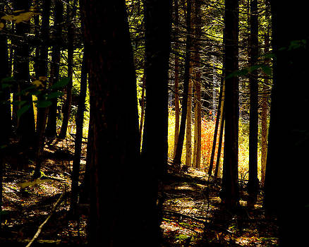 Dark Forest by Allan MacDonald