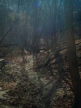 Dark Forest by Sue Midlock