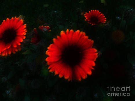 Scott B Bennett - Dark garden