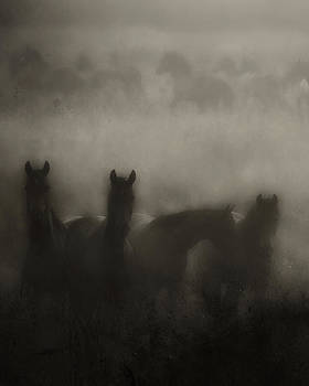 Dark Horse Dreams by Ron  McGinnis