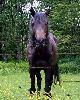 Nicki Bennett - Dark Horse